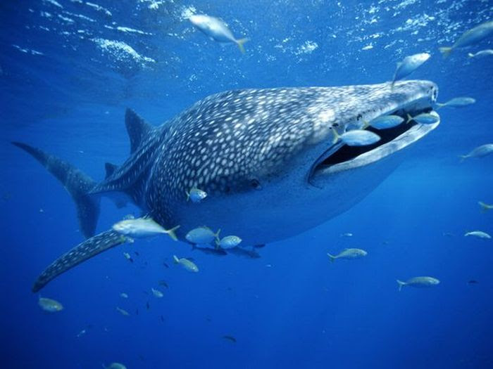 Shark Photos (11 pics)