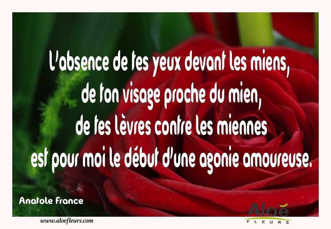 Citation Manque Amour