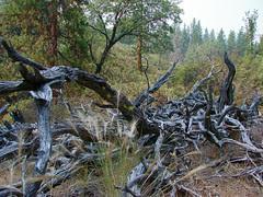 mountain driftwood