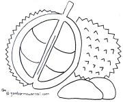 Sketsa Pohon Durian