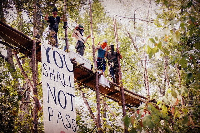 protestors occupy tree