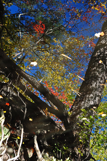 Canal Reflections (6)