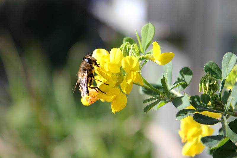 February bee