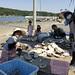stringing shells - to make oyster beds