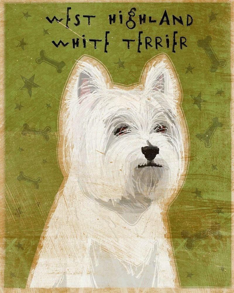 West Highland White Terrier Print 8 in x 10 in - johnwgolden