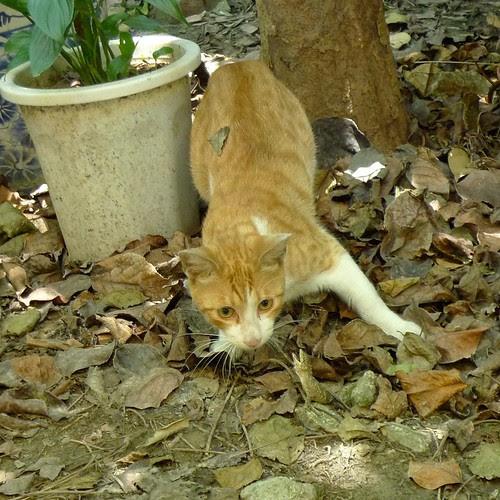 小黃貓與蜥蜴之戰-3