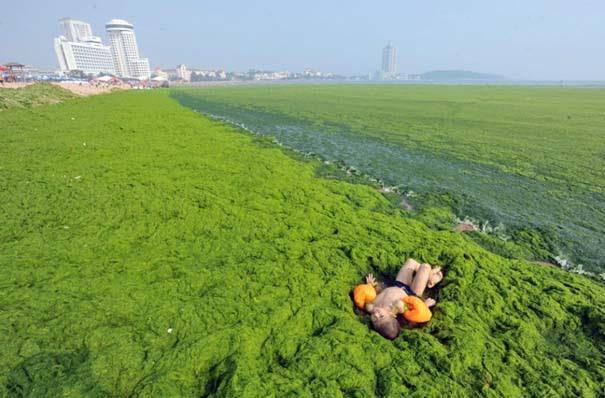 «Θάλασσα» από πράσινο στις ακτές της Κίνας (4)
