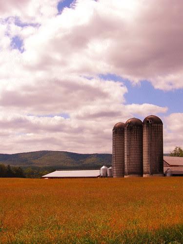 Northern Augusta Farm