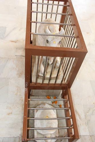 Nandi Vijapur Gujrat by firoze shakir photographerno1