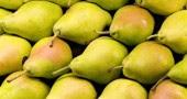 8. Pere: Una pera di medie dimensioni contiene 5 grammi di fibra alimentare, in gran parte sotto forma di pectina, che aiuta a smaltire il colesterolo (Foto:  Jose R. Aguirre/Cover/Getty Images)
