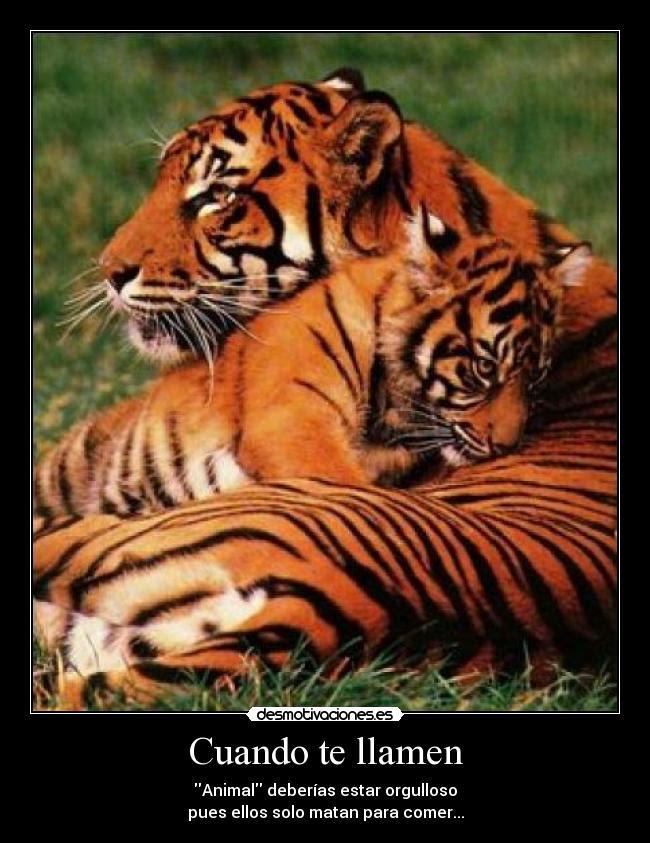 Imagenes De Tigres Con Frases Descargar Imagenes Gratis