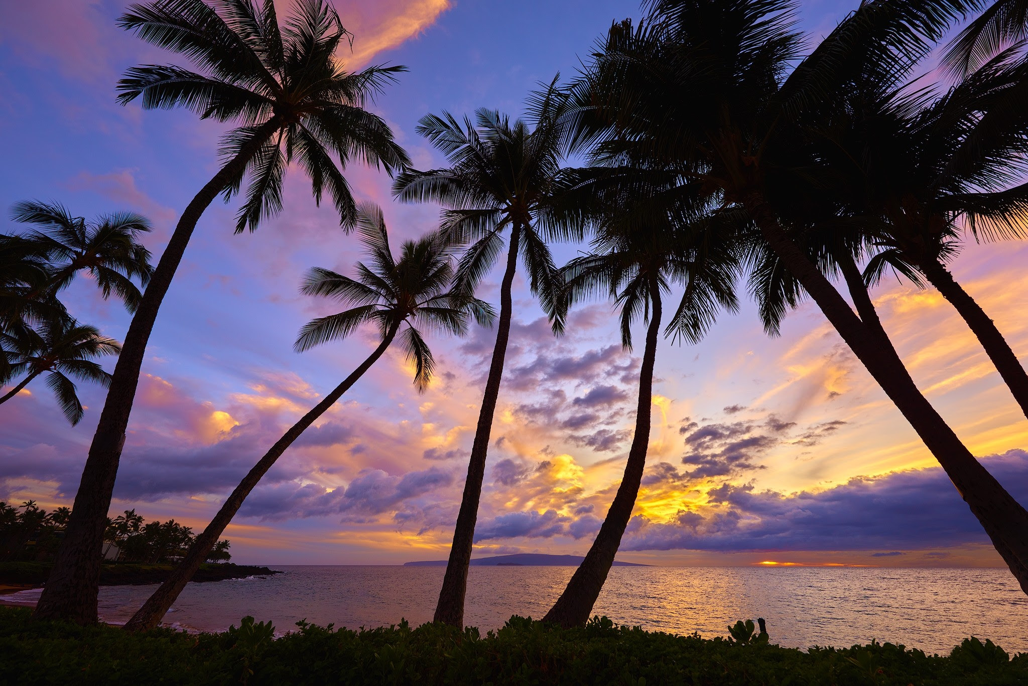 Sunset Palm Trees Wallpaper (62+ images)