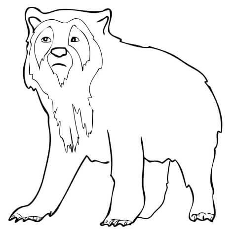 Disegno Di Orso Dagli Occhiali Da Colorare Disegni Da Colorare E