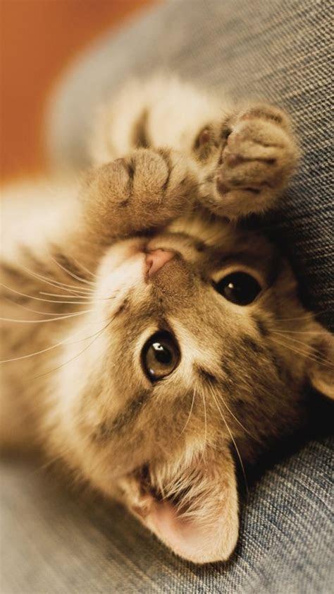 iphone  wallpaper kitten mobile phone wallpapers