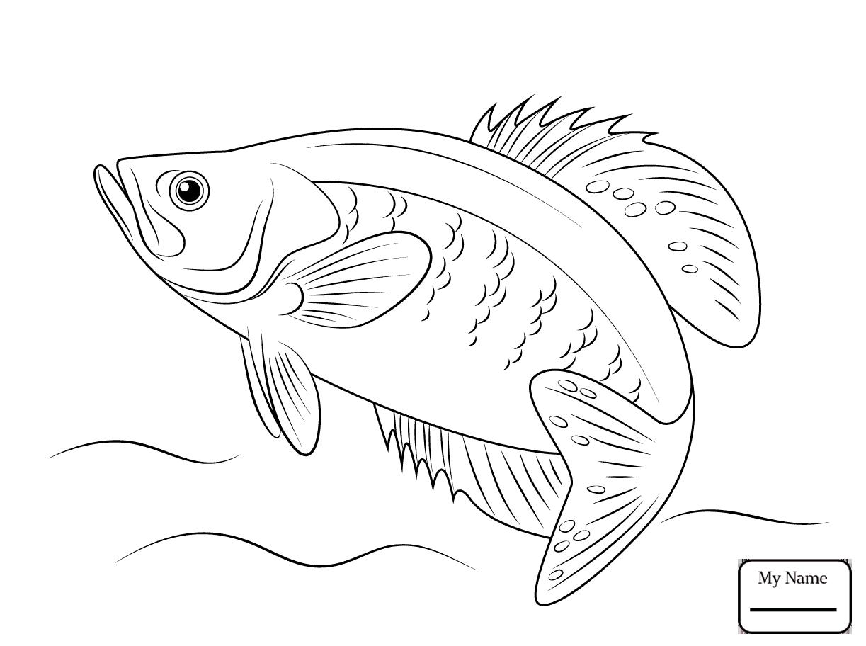 Sunfish Drawing at GetDrawings | Free download