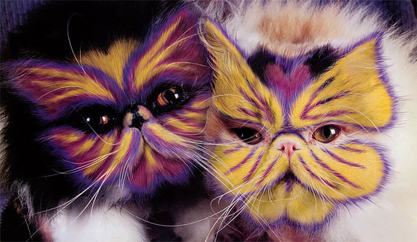 4 funny painted cats