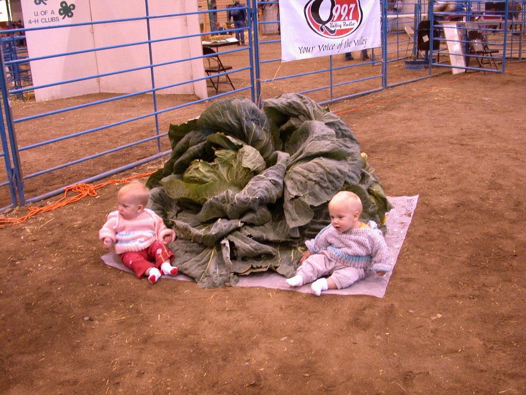 Você sabe por que os vegetais do Alasca são gigantescos? 10