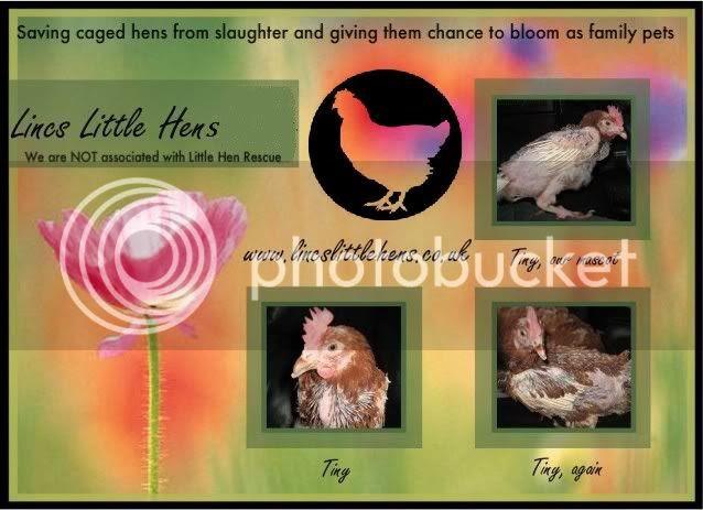 Lincs Little Hens (Sutton Bridge)
