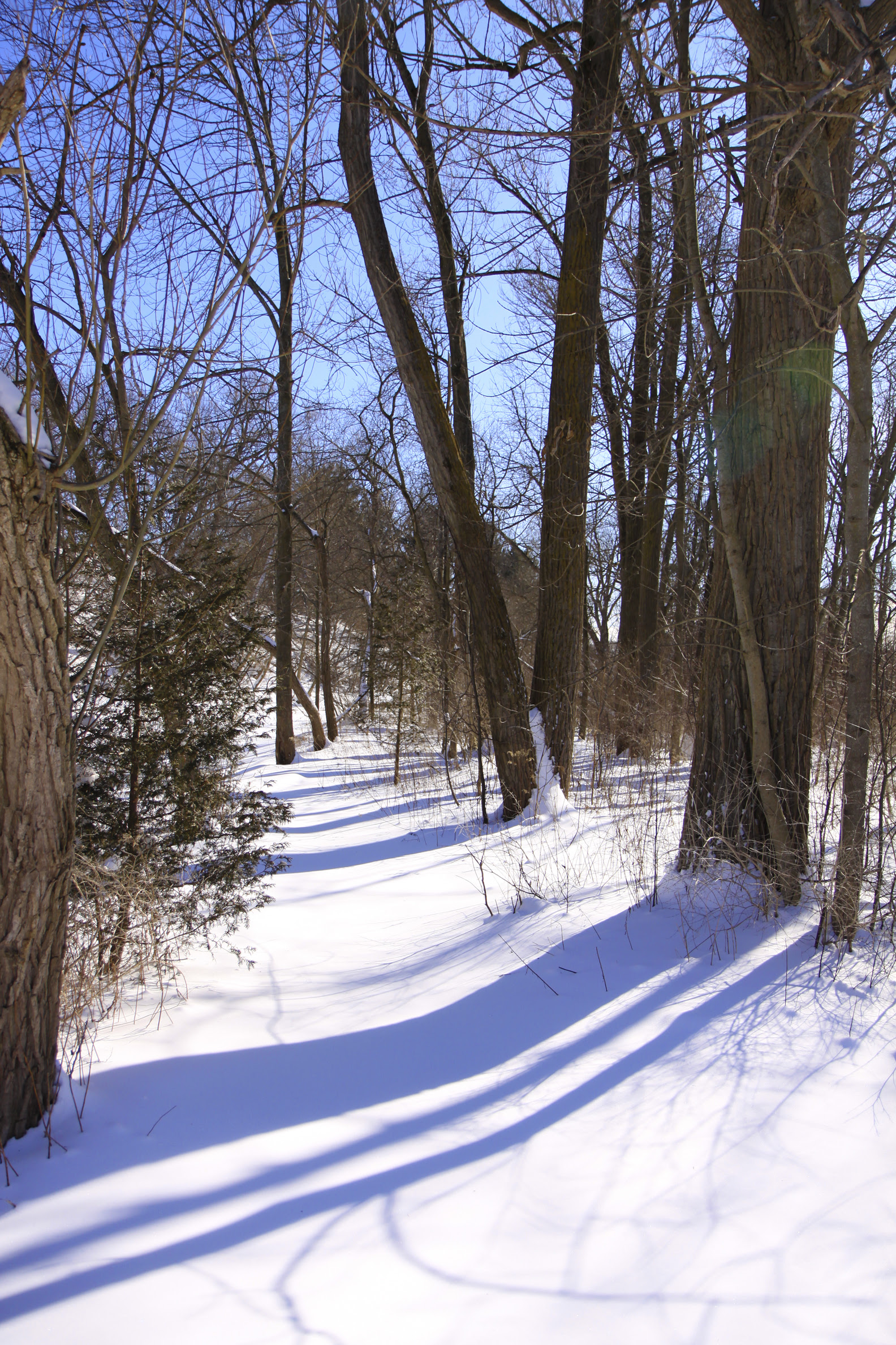 snowed path