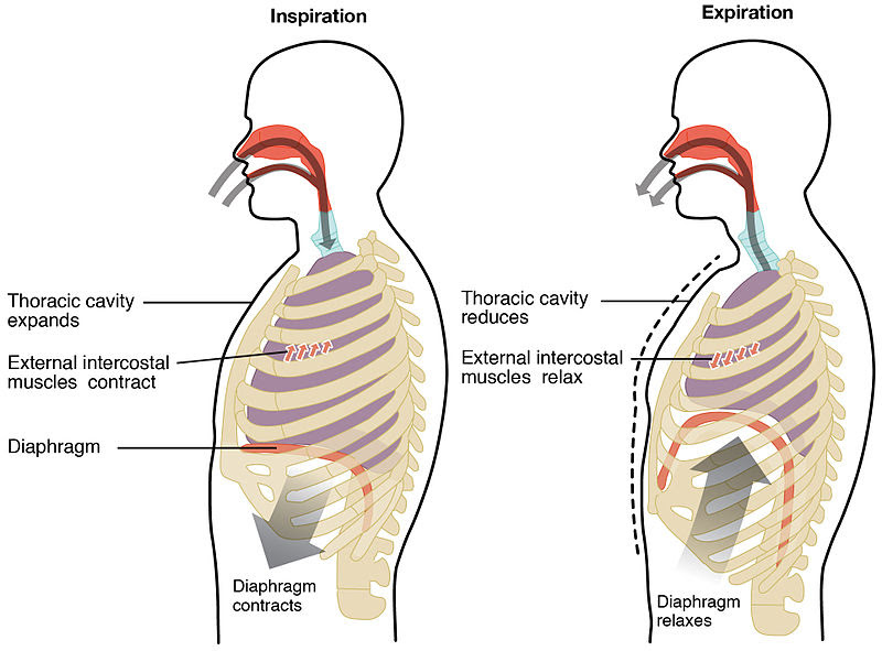 Breathing Diagram