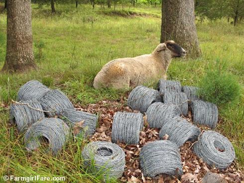 (6) Teddy on barbed wire security duty - FarmgirlFare.com