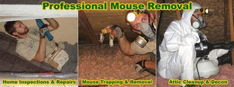 How To Kill Mice In the House, Attic, or Walls