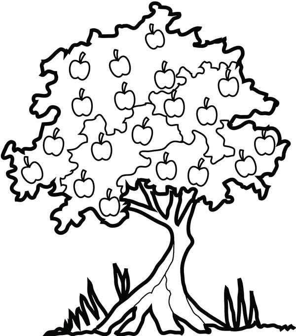 Orman Haftası Etkinlikleri 10 Okul öncesi Etkinlik Faliyetleri
