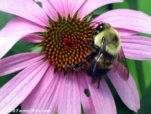 Pollinator Party 5