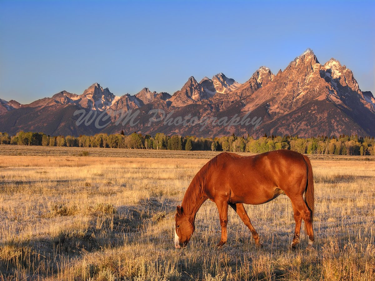 http://www.amazon.com/Sunrise-Grazing-Horse-National-Wyoming/dp/B00T3D0B0O/ref=sr_1_21?s=home-garden&ie=UTF8&qid=1423541536&sr=1-21&keywords=WCM+Photography