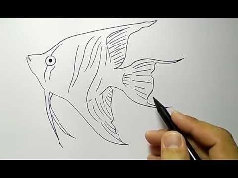 Gambar Ilustrasi Sketsa Gambar Ikan Yang Mudah Digambar Mewarnai Gambar Ikan Sederhana Gambar Ikan Hd