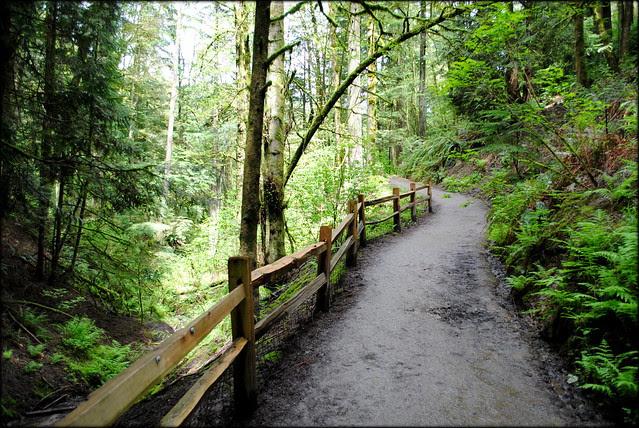 Wildwood Trail - Hoyt Arboretum - Portland, Oregon