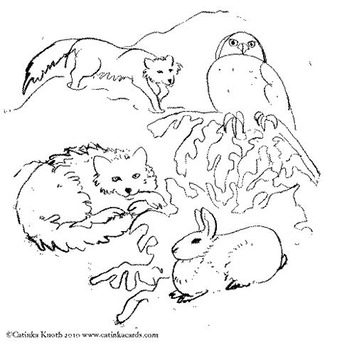 arctic animal coloring pages google search native