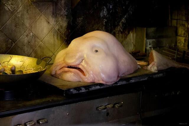 criaturas-mais-feias-e-bizarras_peixe-gota_1