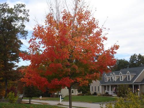 Franklin: Autumn color