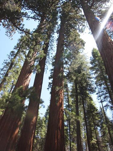 biggesttrees