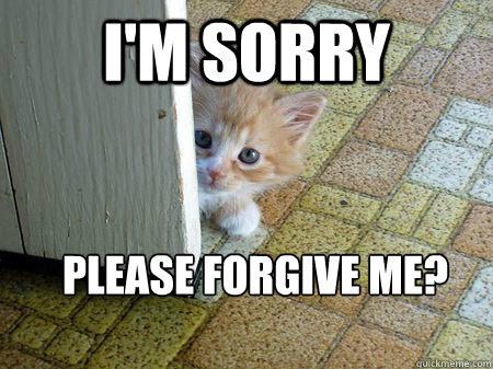 Risultati immagini per gif forgive me cat