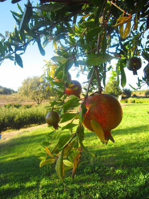 California Pomegranate
