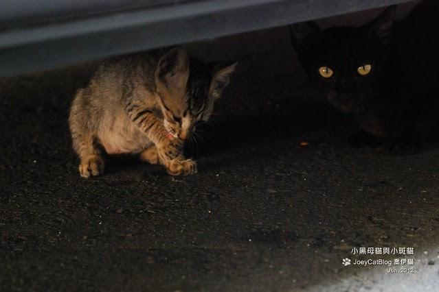 2012_0618_小黑母貓與小斑貓DSC_4886