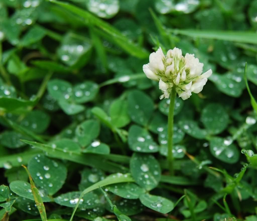 Raindrops and Flowers