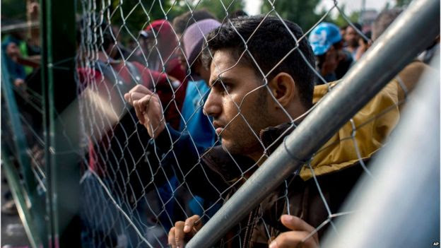 Migrant at border fence between Hungary and Serbia, 15 September