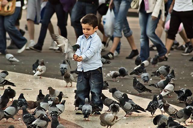 Kid Feeding Pigeons at Plaça Catalunya, Barcelona [enlarge]
