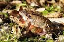 Are You a Forty Plus Man? Try A Frog's Dating Tips | Howdoidate
