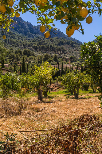 Some sort of farming at Soller, Mallorca