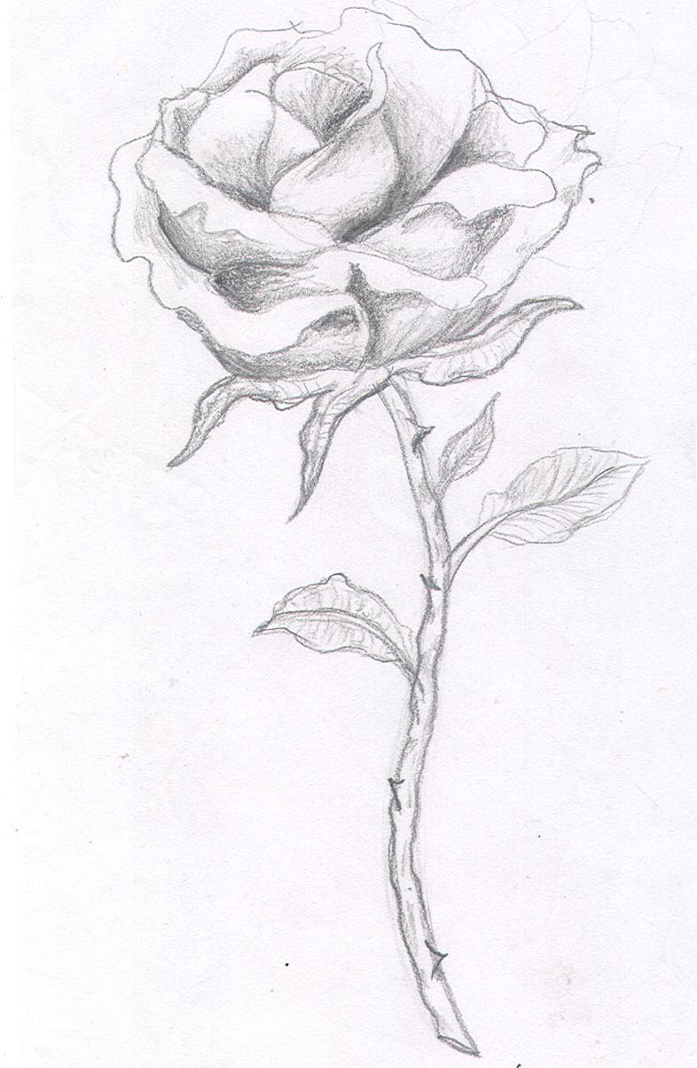 Single Rose Tattoo Design Ellenslillehjorne