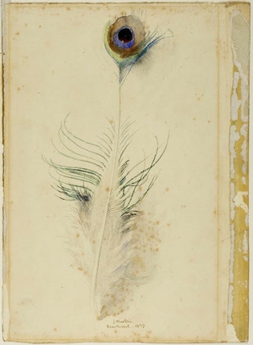 John Ruskin, Peacock Feather, 1877 (via The Art Institute of Chicago)