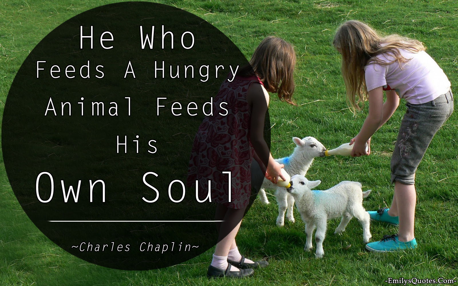 Quotes About Feeding Animals 47 Quotes