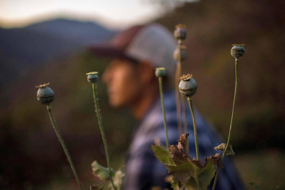 Most of the money spent tackling narcotics is directed toward disrupting supply—by uprooting coca bushes, battling cartels, locking up dealers and so on. Would focusing on demand be more effective? Pictured, a Mexican farmer works in a poppy field in Guerrero, Mexico, in January.