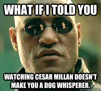 Image result for dog whisperer funny