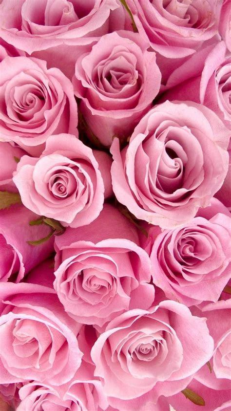 pink roses iphone  wallpaper iphone wallpaper