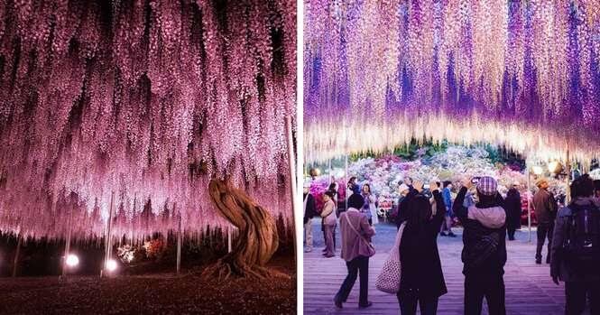 Razões para você lagar tudo e visitar o Japão na primaveraRazões para você lagar tudo e visitar o Japão na primavera